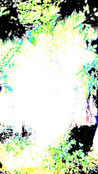 Derivación a árbol. Perteneciente a la Serie fotográfica Espasmos de Olmo Z. realizada en fecha desconocida