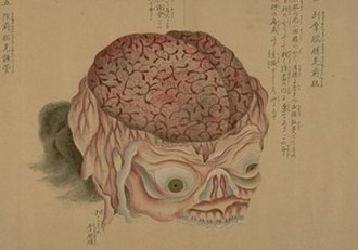 Lámina de Anatomia Japonesa