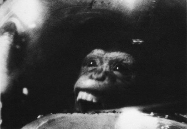 El vuelo espacial del mono