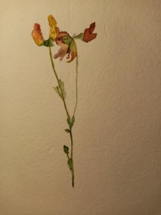 Flor silvestre de Fernando Loygorri, ca. 1989