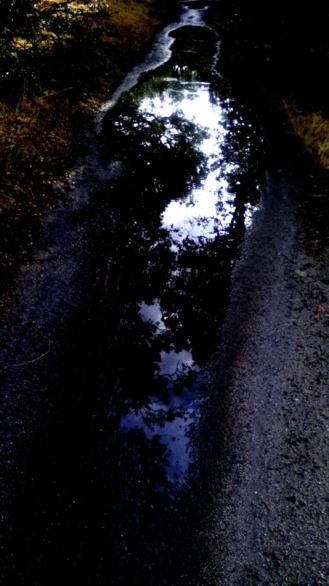 Charco de hombre y reflejos de cielo y árbol. Fotografía de Olmo Z. Junio 2015