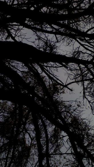 Enramada. Fotografía de Olmo Z. Noviembre 2015